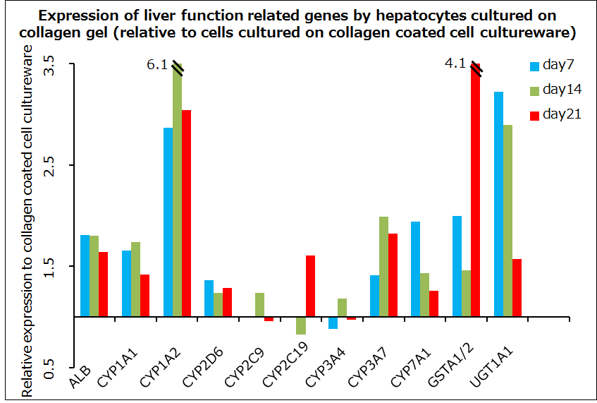 Expression of liver function related genes by hepatocytes cultured on collagen gel (relative to cells cultured on collagen-coated cell cultureware)